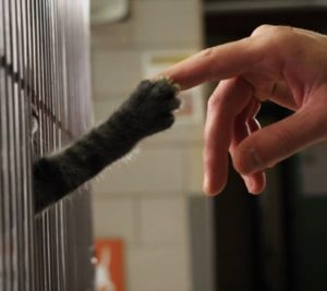 national pet adoption day cat paw