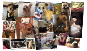 national mutt day venterra rescued pets